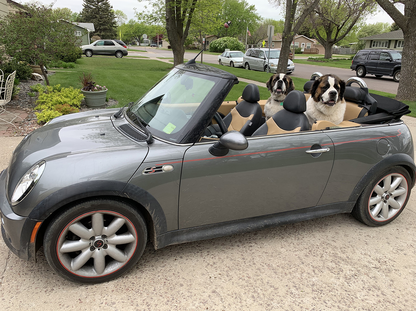 dogs go for a ride in a car