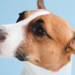 Pet Care in Aberdeen